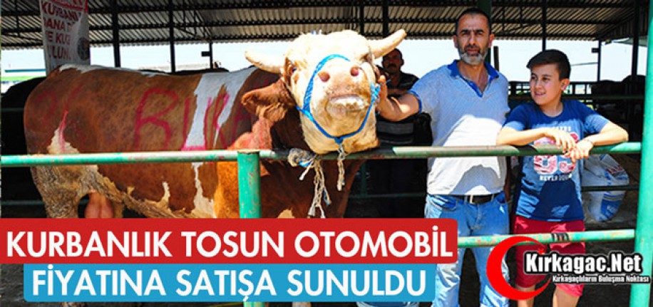 KURBANLIK TOSUN OTOMOBİL FİYATINA SATIŞA SUNULDU