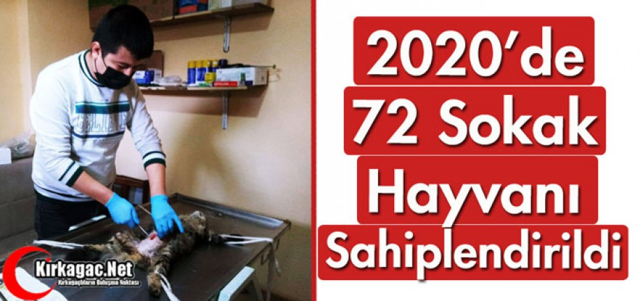 2020'DE 72 SOKAK HAYVANI SAHİPLENDİRİLDİ