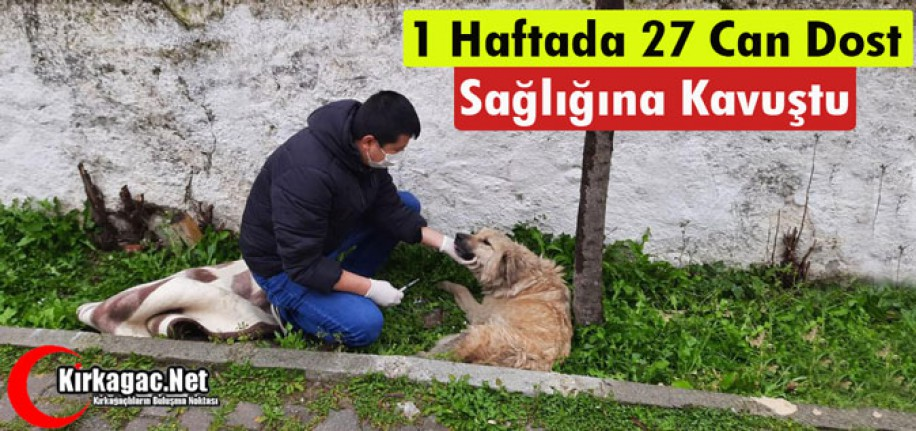 1 HAFTADA 27 CAN DOST SAĞLIĞINA KAVUŞTU