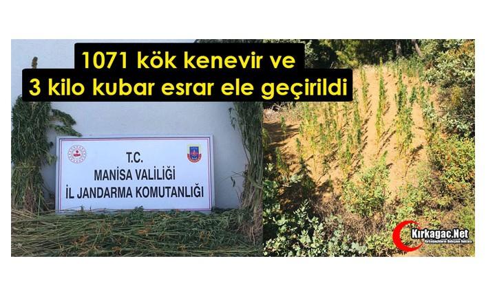 1071 Kök Kenevir ve 3 Kilo Kubar Esrar Ele Geçirildi