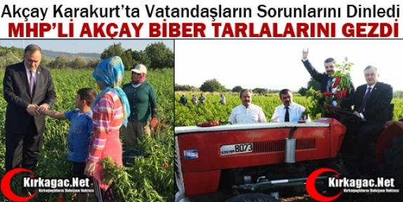 MHP'Lİ AKÇAY KARAKURT'TA BİBER TARLALARINI GEZDİ