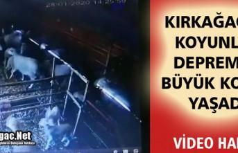 KIRKAĞAÇ'TA KOYUNLAR DEPREMDE BÜYÜK KORKU...