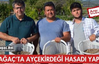 KIRKAĞAÇ'TA AY ÇEKİRDEĞİNDE İLK HASAT...