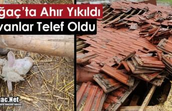 AHIR YIKILDI HAYVANLAR TELEF OLDU
