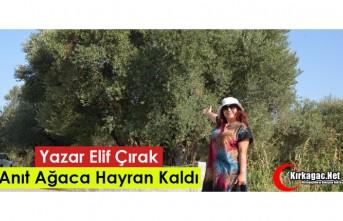 """YAZAR ELİF ÇIRAK """"TARİHİ ANIT AĞACA"""" HAYRAN..."""