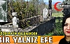 """PELİN ÖZBERK """"BİR YALNIZ EFE"""""""