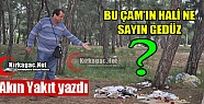 """AKIN YAKIT 'BU ÇAM'IN HALİ NE GEDÜZ"""""""