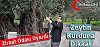 "BOĞAZ 'ZEYTİN KURDUNA DİKKAT"""