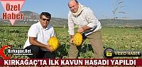 KIRKAĞAÇ KAVUNUNDA İLK HASAT YAPILDI(ÖZEL...