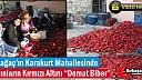 "KARAKURTLU KADINLARIN KIRMIZI ALTINI ""DOMAT BİBER""(VİDEO)"