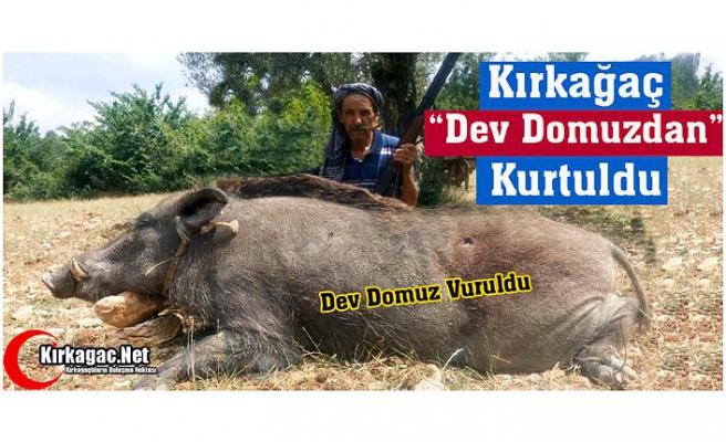"""KIRKAĞAÇ """"DEV DOMUZDAN"""" KURTULDU"""