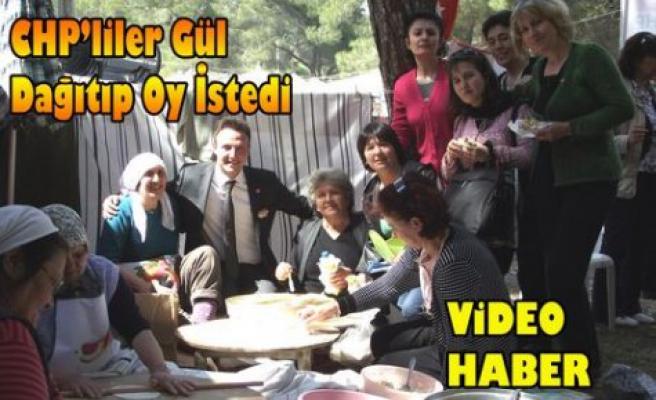 CHP'liler Gül Dağıtıp Oy istediler(VİDEO)