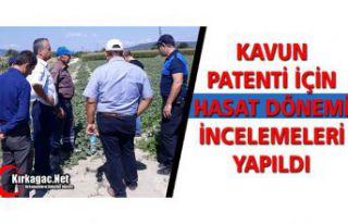 KAVUN PATENTİ İÇİN HASAT DÖNEMİ İNCELEMELERİ...