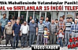 KIRKAĞAÇ'TA SIRTLAN ve ÇAKALLAR 15 İNEĞİ TELEF...
